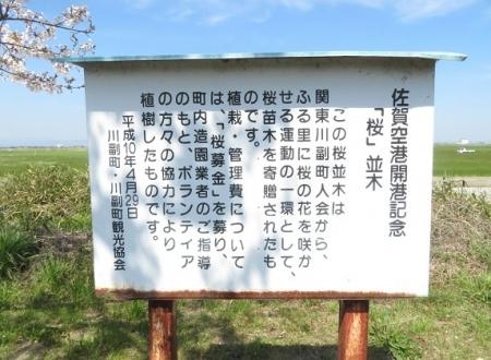 佐賀空港の桜 2019-04-04 002