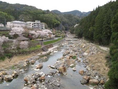 星野村 桜 2019-04-05 184