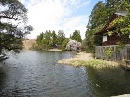 星野村 桜 2019-04-05 137