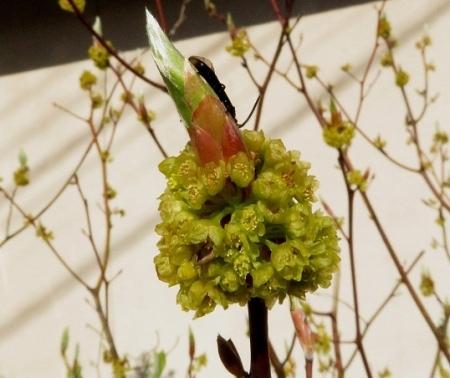 星野村 桜 2019-04-05 004