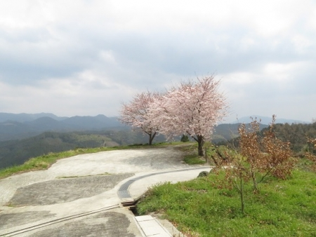 桜グリーンピア 黒木 2019-03-30 095
