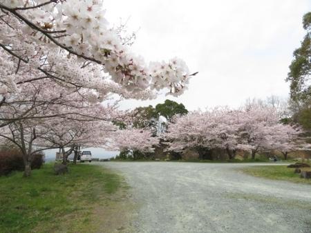 桜グリーンピア 黒木 2019-03-30 063