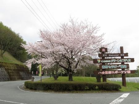 桜グリーンピア 黒木 2019-03-30 008