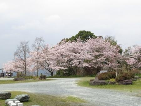 桜グリーンピア 黒木 2019-03-30 049