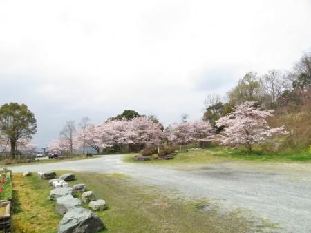 桜グリーンピア 黒木 2019-03-30 048