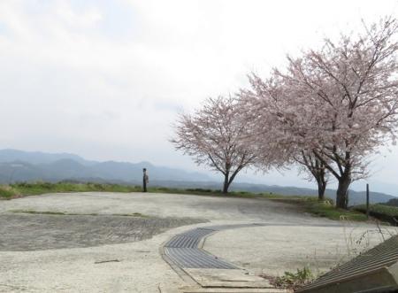 桜グリーンピア 黒木 2019-03-30 090