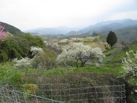 桜グリーンピア 黒木 2019-03-30 117