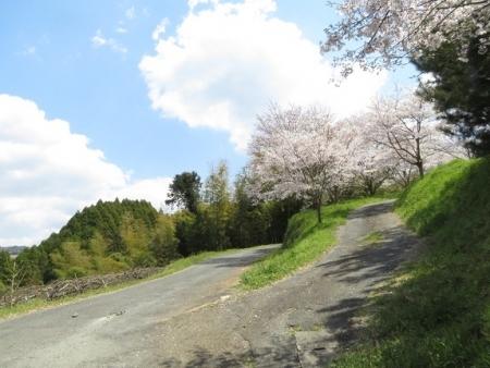 一本桜 2019-04-02 003