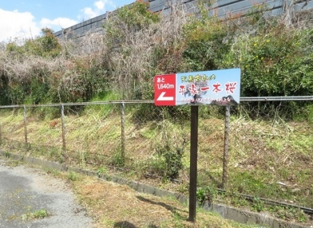 一本桜 2019-04-02 002