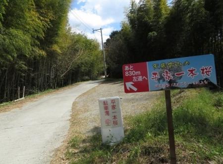 一本桜 2019-04-02 040
