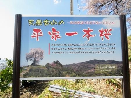 一本桜 2019-04-02 112