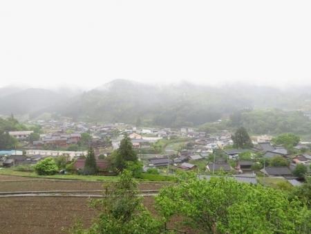 星野 ハンカチノキ 2019-04-30 061