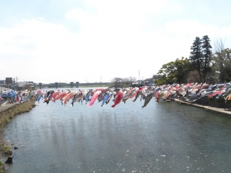 川上峡鯉幟 2019-03-23 038