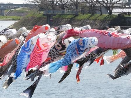 川上峡鯉幟 2019-03-23 041