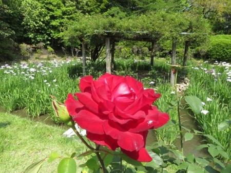 御花の新婚さん 2019-05-23 052