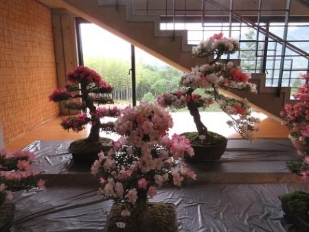 かぐや姫の森 野点 2019-06-02 063
