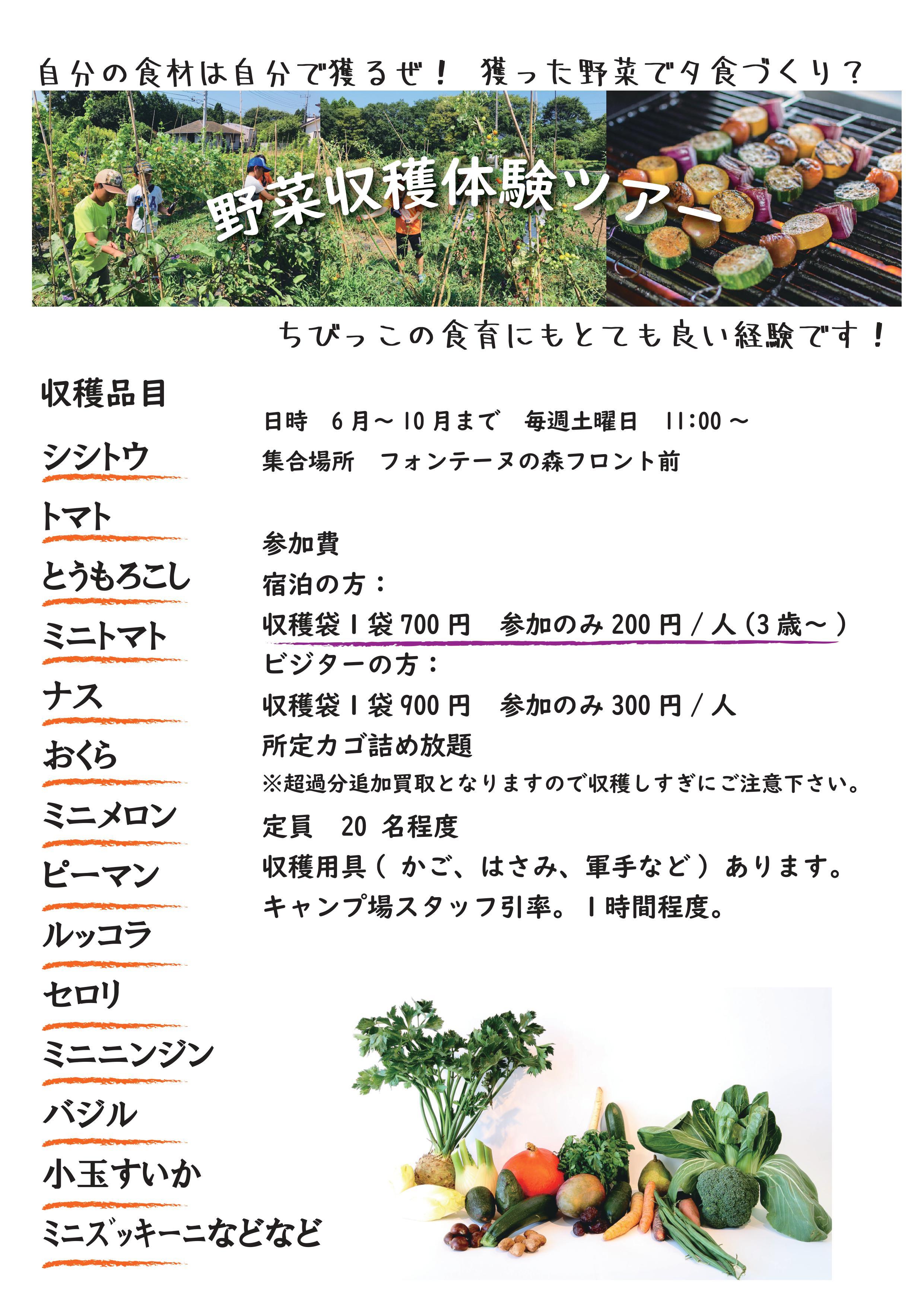 野菜収穫体験ができるようになります。