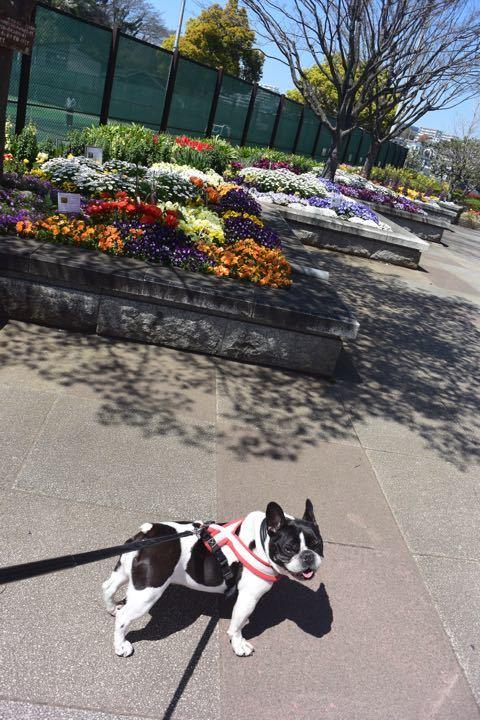 花壇満開の公園
