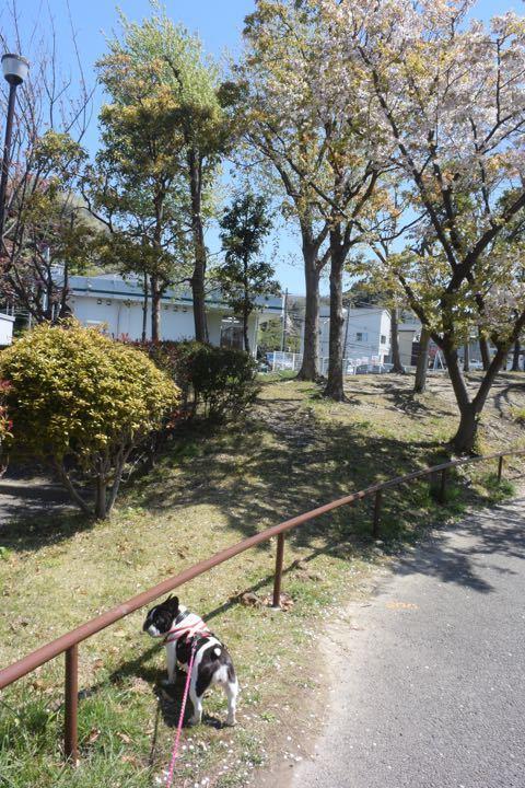 葉桜とオセロ
