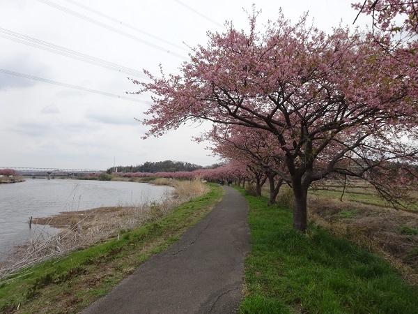 190316花見川と稲毛 (2)