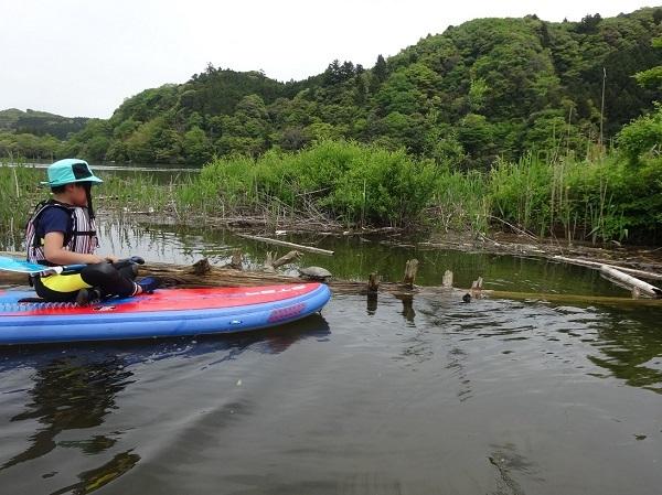 190503亀山湖SUP  (25)