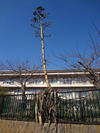 鎌倉歩き1