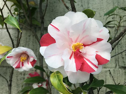 190407 花