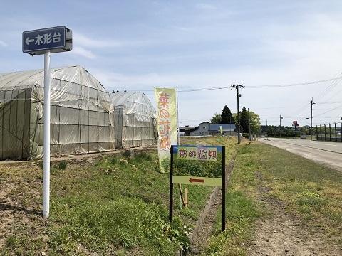 14菜の花畑看板