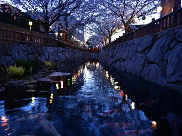 ライトアップの水面