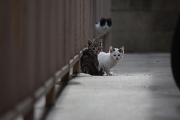 猫20,21,22