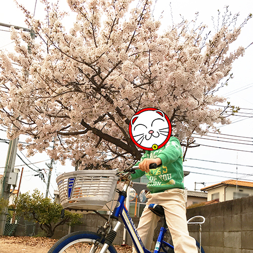 桜 満開!③