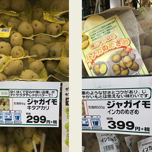 男爵ジャガイモの種イモを植え付ける ~2019年春~①
