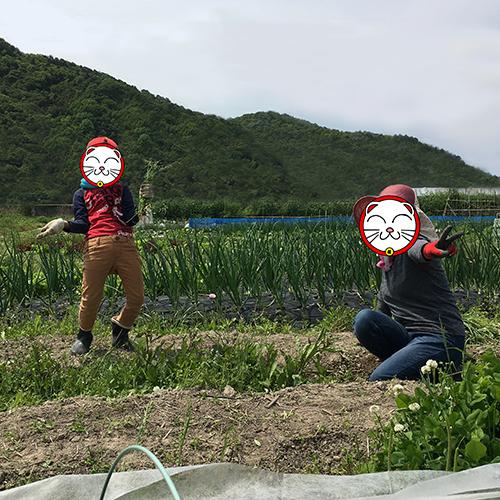 トウモロコシとキュウリの苗を植える ~2019年春~①