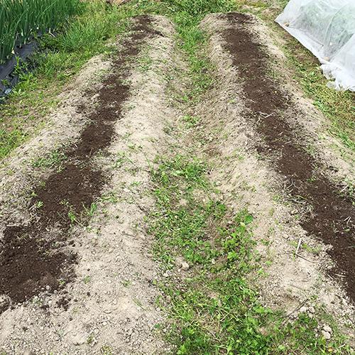 トウモロコシとキュウリの苗を植える ~2019年春~②