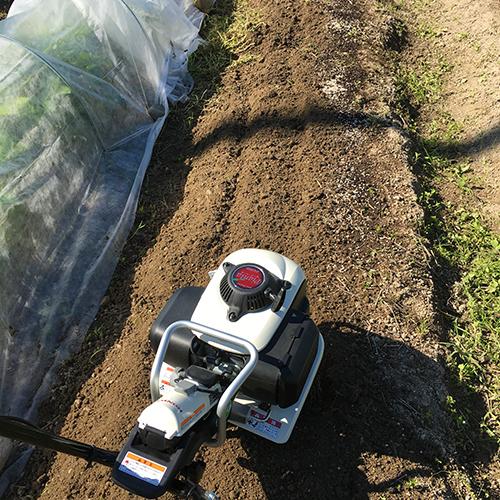 トウモロコシとキュウリの苗を植える ~2019年春~④
