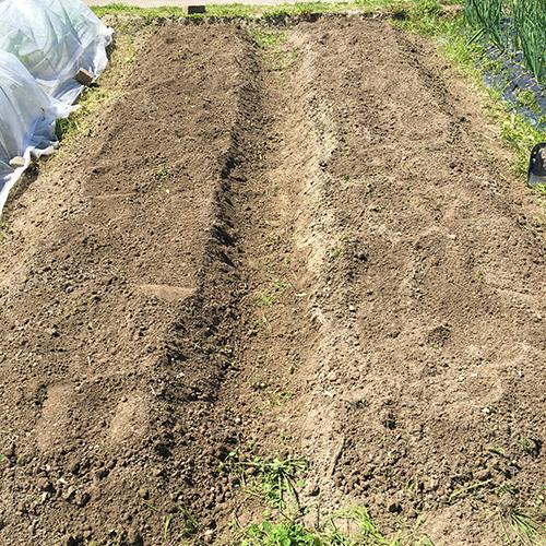 トウモロコシとキュウリの苗を植える ~2019年春~⑤
