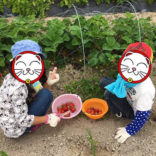 わが子のお友達と一緒にイチゴ狩り♪③