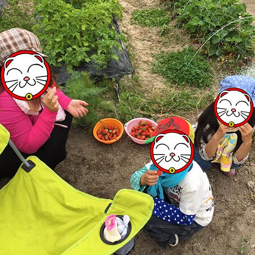 わが子のお友達と一緒にイチゴ狩り♪⑤