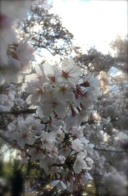 お花見ピクニック201901