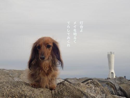 morinoakari102.jpg