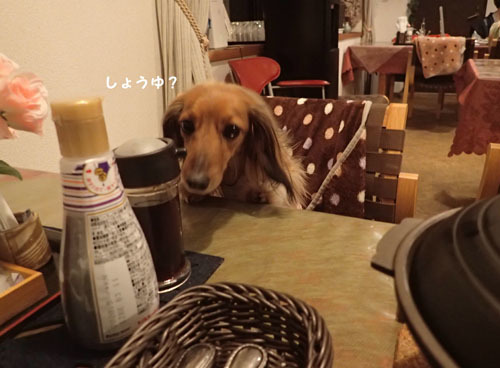 morinoakari21.jpg