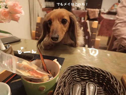 morinoakari33.jpg
