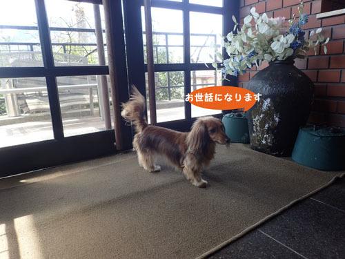 morinoakari36.jpg
