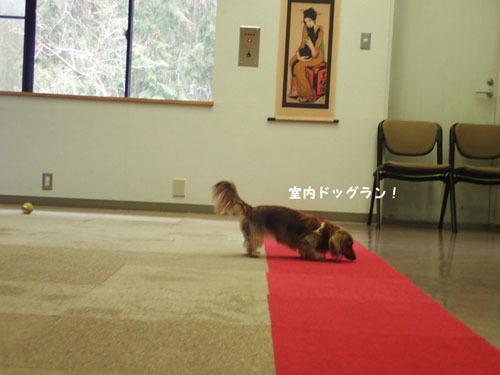 morinoakari38.jpg