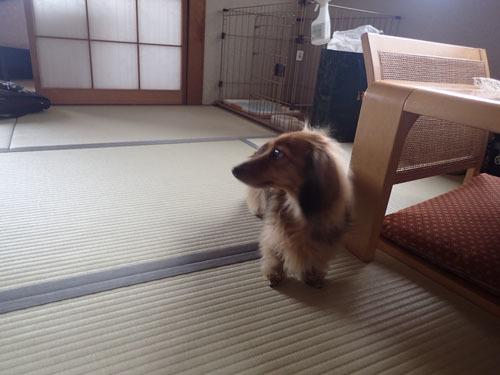 morinoakari56.jpg