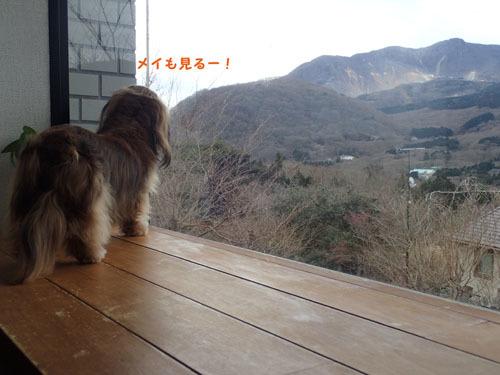 morinoakari60.jpg