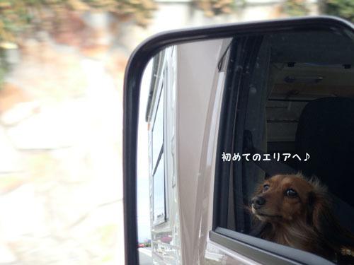 morinoakari75.jpg