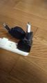 巻取り式USB Type-C to Cケーブル(PD対応)導入(3)