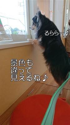s-DSC_0201.jpg