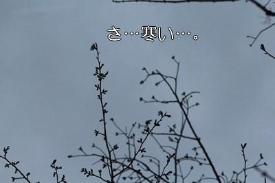 s-IMG_7728.jpg